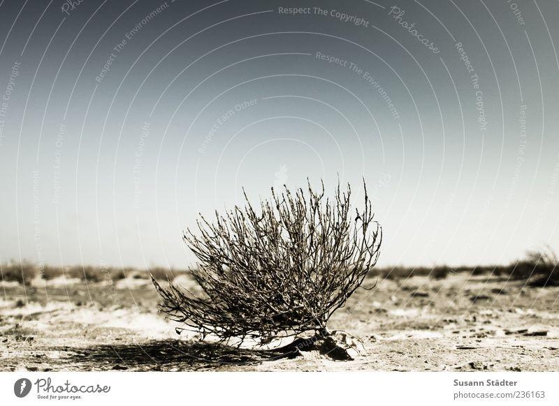 Spiekeroog | Überlebenskünstler Pflanze Urelemente Sand Dürre Strand Salzwiese Salzwüste Außenaufnahme Nahaufnahme Menschenleer Textfreiraum oben Tag trocken