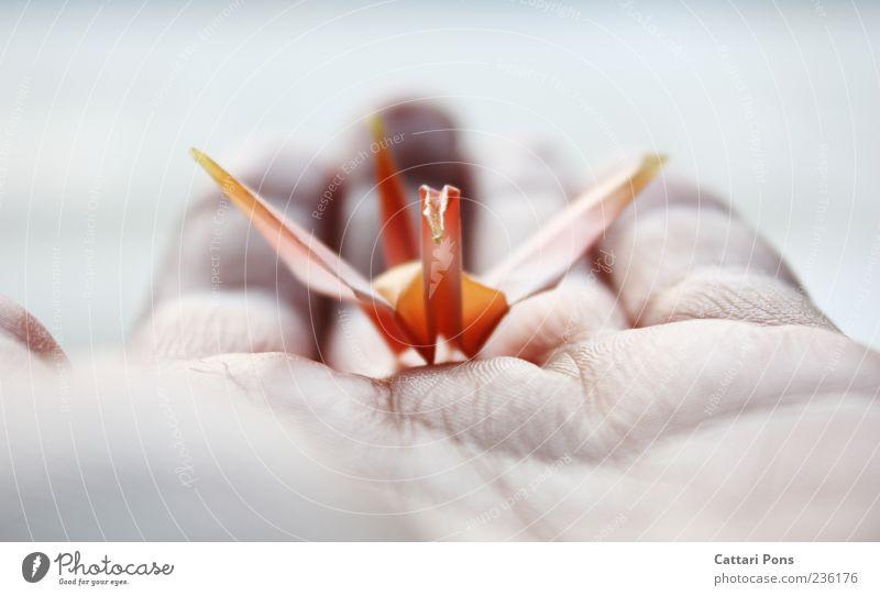 find a way... Hand Finger Vogel Kranich Schwan festhalten tragen hell klein nah dünn weich Vertrauen träumen Wunsch Origami Papier Leichtigkeit leicht Basteln