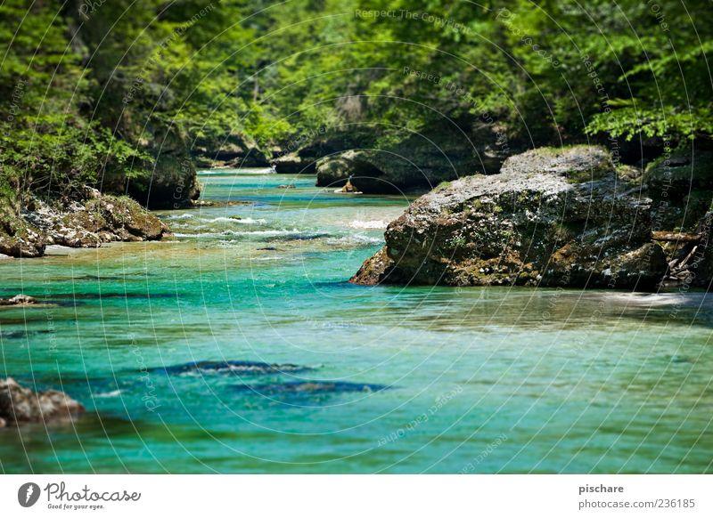 Irgendwo im Nirgendwo Natur Landschaft Wasser Wald Flussufer natürlich blau grün salzach Farbfoto Außenaufnahme Tag Schwache Tiefenschärfe Felsen Stein Pflanze
