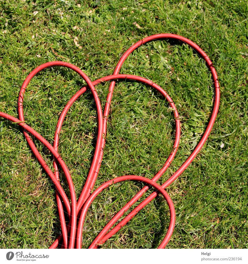 der rote Faden... Natur grün Pflanze Umwelt Wiese Gras Garten liegen authentisch Sicherheit Kabel einzigartig Rasen einfach Kunststoff