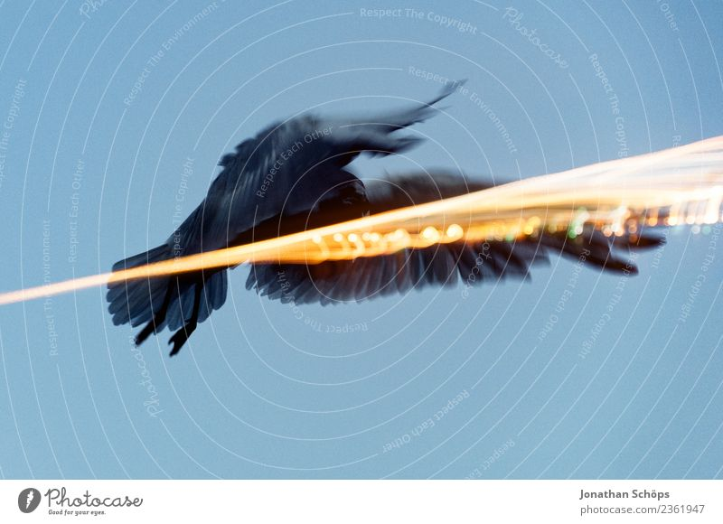fliegende Möwe an der Ostsee Tier Deutschland Vogel Insel Flügel graphisch tierisch Doppelbelichtung Rügen Landen rebellisch Lichtstrahl Absturz