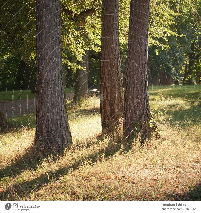 drei Bäume im Park werfen Schatten Natur Sommer grün Landschaft Baum Erholung Wald Umwelt ästhetisch 3 Spaziergang Baumstamm Naturschutzgebiet Waldrand