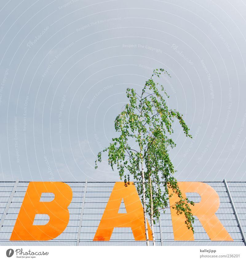 -bar Natur grün Baum Pflanze Stil Feste & Feiern orange Freizeit & Hobby Schilder & Markierungen Schriftzeichen Lifestyle Bar Zaun Lounge Gastronomie Birke