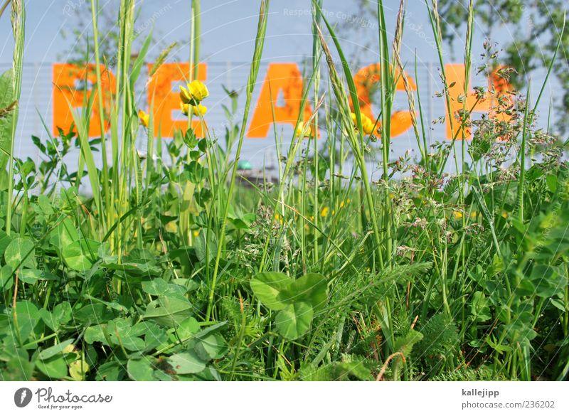 beach- Natur Pflanze grün Gras Stil Lifestyle Freizeit & Hobby Wachstum Schilder & Markierungen Schriftzeichen Halm Bar Eingang Unkraut Lounge ausgehen