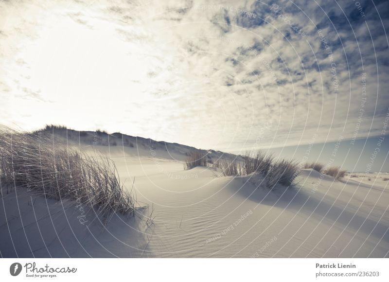 Spiekeroog | caught in a dream ruhig Ferne Strand Umwelt Natur Landschaft Pflanze Urelemente Sand Himmel Wolken Horizont Sonne Sonnenlicht Klima Klimawandel