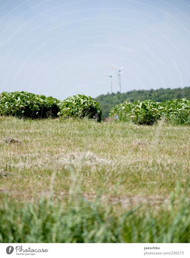 Bioerdbeeren Natur grün Sommer Umwelt Landschaft Frühling Deutschland Feld Klima Energie Hügel Schönes Wetter Landwirtschaft Windkraftanlage Klimawandel