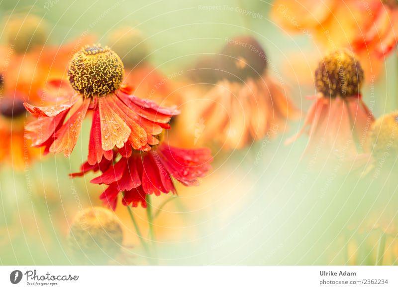 Sommerblumen - Blumen und Natur elegant Design Wellness Leben harmonisch Wohlgefühl Zufriedenheit Erholung ruhig Meditation Dekoration & Verzierung Tapete