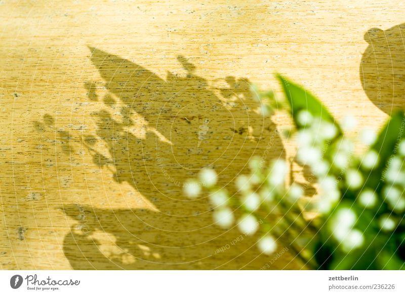Convallaria majalis Natur Sommer Blume Blatt Frühling Blüte Tisch gut Lebensfreude Gift Grünpflanze Frühlingsgefühle Heilpflanzen Maiglöckchen