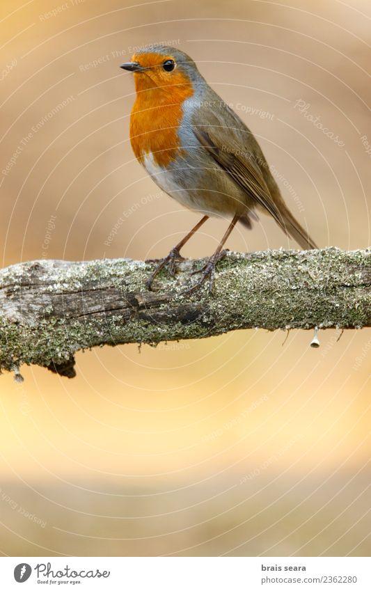 Natur Farbe weiß Baum rot Tier ruhig Wald Leben Holz klein Garten Vogel braun wild frei