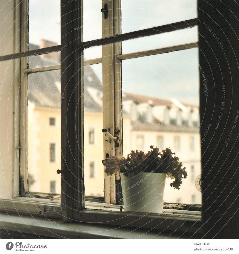 Salat Am Fensterbrett Ein Lizenzfreies Stock Foto Von Photocase