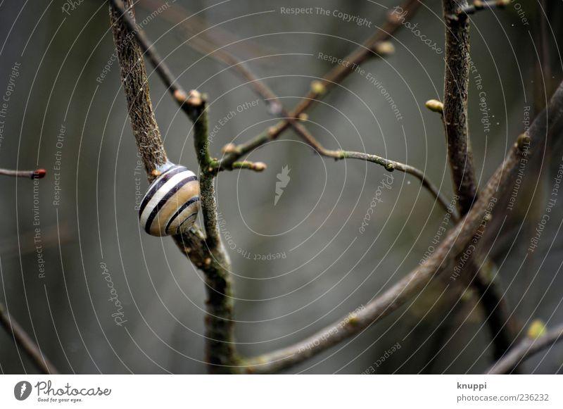 Schneckchen Natur weiß Pflanze Tier ruhig Erholung Umwelt Frühling Regen braun Wildtier wild natürlich Sträucher Streifen niedlich