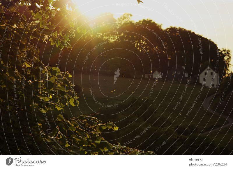Pollenflug Umwelt Landschaft Pflanze Himmel Sonne Sonnenaufgang Sonnenuntergang Sonnenlicht Sommer Schönes Wetter Baum Blatt Blüte Grünpflanze Haus Straße Leben