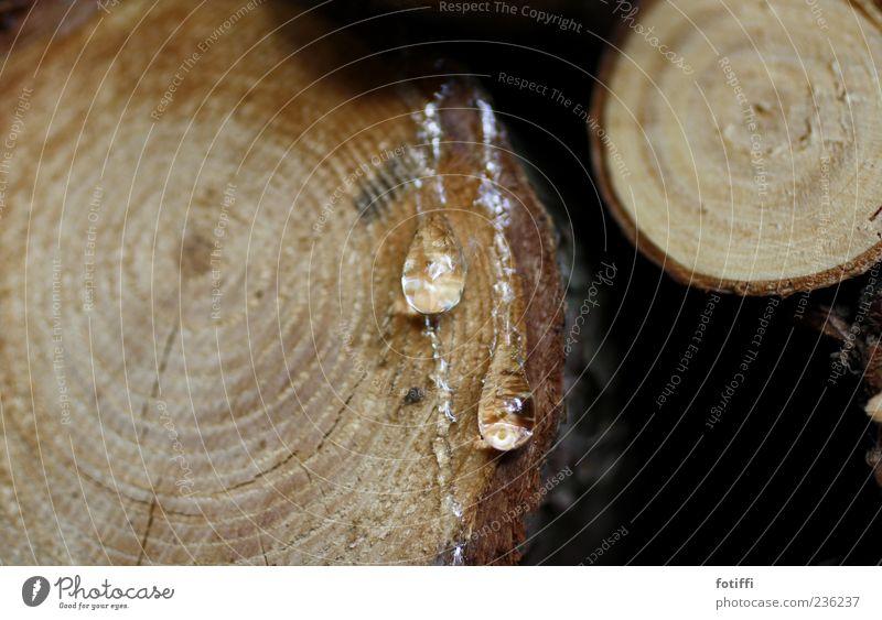 Darf ich dir mein Herz harzen* ? Natur Baum Kreis rund Tropfen Flüssigkeit Baumstamm kleben organisch hydrophob Baumharz