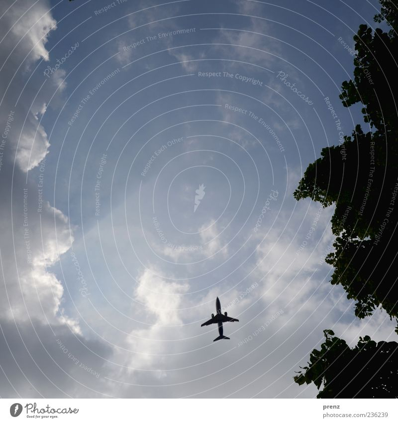 himmel Himmel blau Baum Pflanze Blatt Wolken Luft Wetter fliegen Verkehr Flugzeug Luftverkehr Schönes Wetter Baumkrone Blauer Himmel Passagierflugzeug