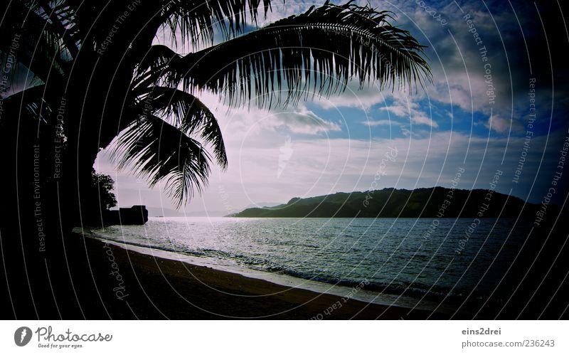 Dark Paradise Himmel Natur Wasser Baum Ferien & Urlaub & Reisen Meer Sommer Strand Wolken ruhig Ferne Erholung Umwelt Landschaft Freiheit Sand