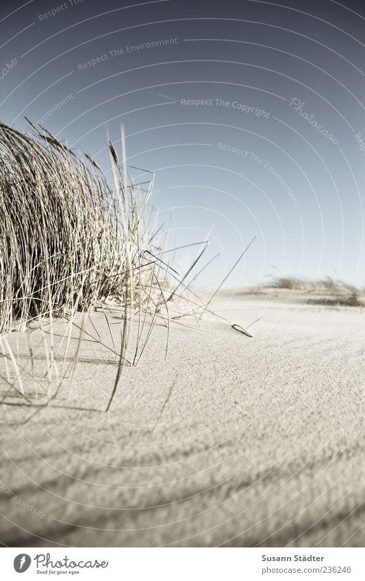 Spiekeroog | sehnsüchtig Natur Pflanze Urelemente Erde Sand Wolkenloser Himmel Sommer Wind Gras Küste Nordsee genießen ruhig Biegung Düne Dünengras Stranddüne