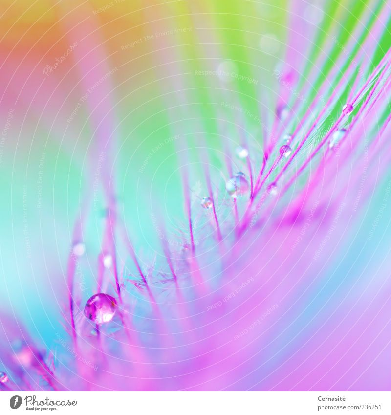 blau schön grün Wasser Leben Gefühle Frühling außergewöhnlich Stimmung rosa glänzend frisch authentisch Feder verrückt ästhetisch