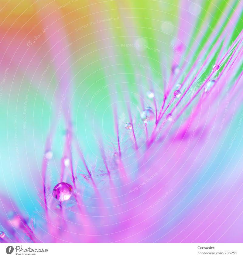 Farben des Regenbogens Wasser Wassertropfen Sonnenlicht Frühling ästhetisch authentisch frisch glänzend schön nah nass dünn verrückt blau mehrfarbig grün rosa