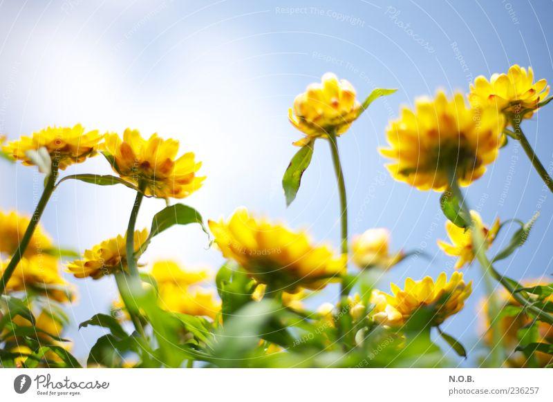 Lichtbild Himmel Natur blau grün Pflanze Sommer Blume Farbe gelb Frühling frisch ästhetisch Schönes Wetter Blühend Duft positiv
