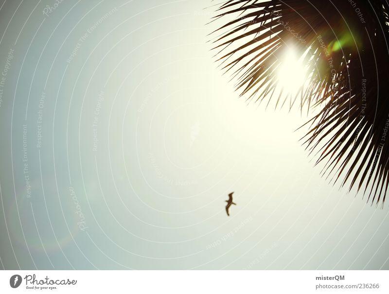 summer feeling. Himmel Sonne Sommer Freiheit Vogel ästhetisch leuchten Schönes Wetter Palme Wolkenloser Himmel Blendenfleck Natur Palmenwedel Vogelflug Klarer Himmel Vor hellem Hintergrund