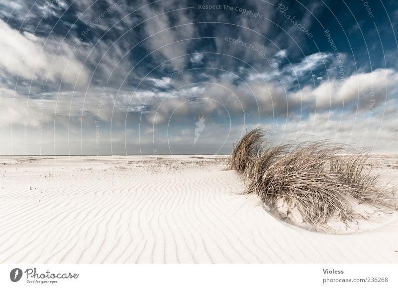 Spiekeroog | ...St. Patrick's Clouds Ferien & Urlaub & Reisen Freiheit Sommer Sommerurlaub Strand Meer Erholung blau weiß Natur Wolken Wolkenhimmel Dünengras