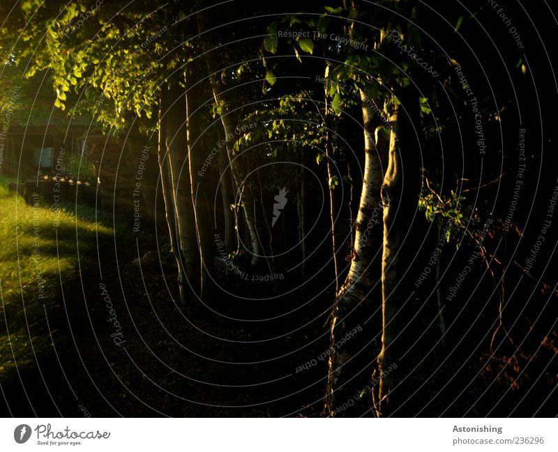 die vorletzten Sonnenstrahlen Natur grün Baum Sommer schwarz Umwelt Wiese Holz Hütte Baumstamm Wald Waldrand
