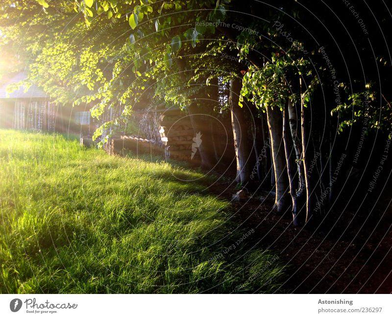 die letzen Sonnenstrahlen Natur Sonnenlicht Sommer Baum Gras Wiese Hütte Holz grün schwarz Baumstamm Blatt Farbfoto Außenaufnahme Menschenleer Abend Dämmerung