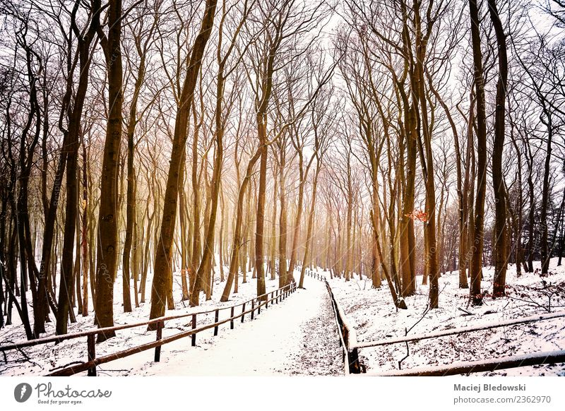 Winterliche Waldlandschaft mit verschneiten Wegen. Ferien & Urlaub & Reisen Tourismus Abenteuer Freiheit Schnee Winterurlaub Natur Landschaft Baum Park