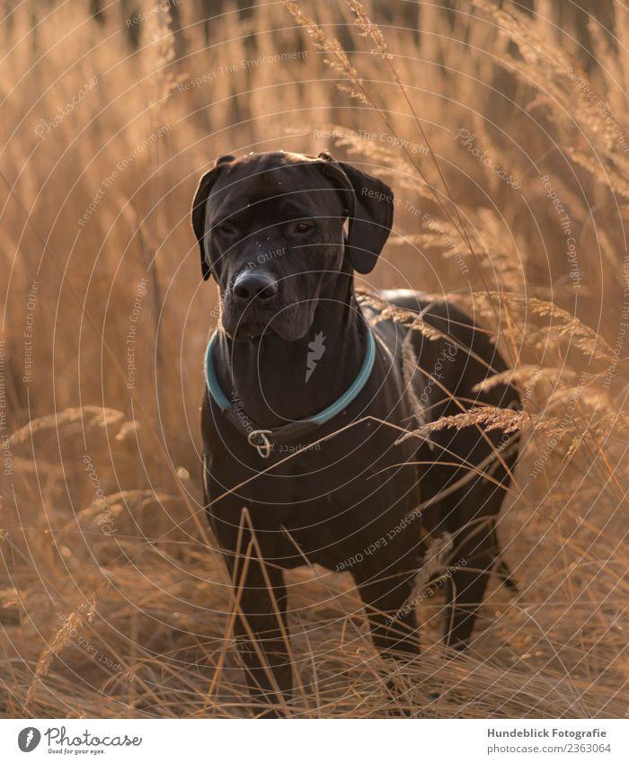 Hund im Gras Umwelt Natur Pflanze Sonne Sonnenlicht Frühling Sommer Herbst Schönes Wetter Wärme Dürre Wiese Tier Haustier 1 Erholung Blick stehen träumen warten