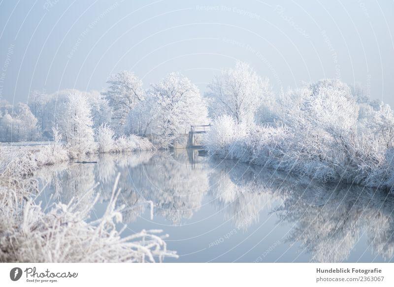 Wintersonne am Flussufer Natur Landschaft Wasser Himmel Sonnenlicht Schönes Wetter Eis Frost Schnee Baum Bach frieren Coolness frisch Unendlichkeit hell kalt