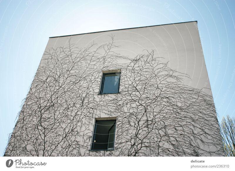 Hochgewachsen Himmel blau Pflanze Haus Fenster Wand Architektur Mauer Gebäude Fassade Bauwerk Blauer Himmel Ranke Einfamilienhaus bewachsen Betonwand