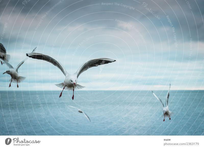 Zeitlos | ins Blaue Freiheit Meer Umwelt Natur Tier Urelemente Wasser Himmel Horizont Klima Wetter Ostsee Wildtier Vogel Flügel Tiergruppe fliegen authentisch