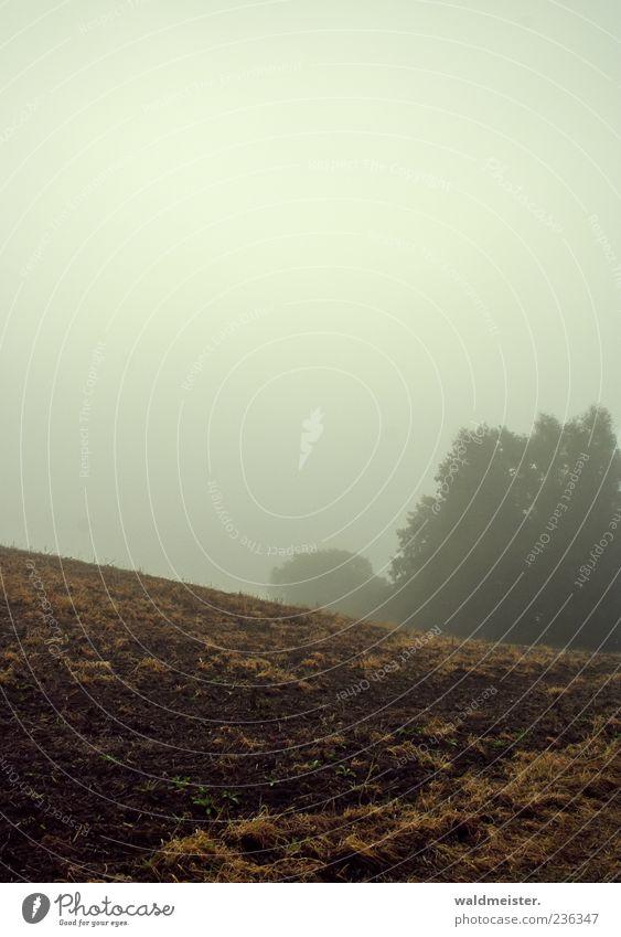 Herbst Himmel Natur Ferne Landschaft Gefühle grau braun Wetter Feld Nebel Landwirtschaft trüb Endzeitstimmung Stimmung Ackerboden