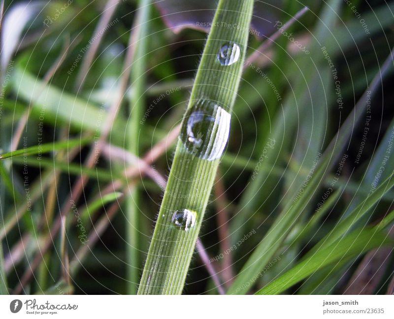 Wassertropfen grün Gras Regen