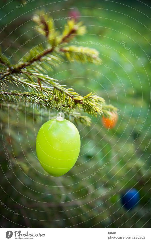 Grün abhängen Dekoration & Verzierung Feste & Feiern Ostern Kunststoff Ei Osterei Zweig Tannennadel Frühling April festlich Farbfoto mehrfarbig Außenaufnahme