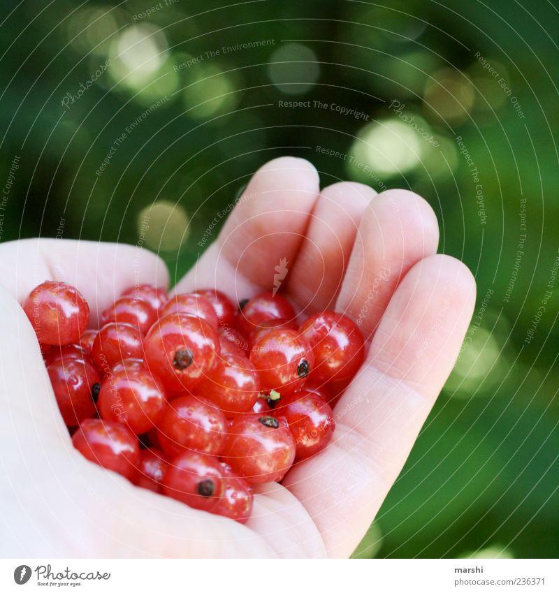ne Hand voll Beeren Hand grün rot Ernährung klein Essen Lebensmittel Frucht rund lecker Bioprodukte Beeren zeigen Geschmackssinn geschmackvoll fruchtig