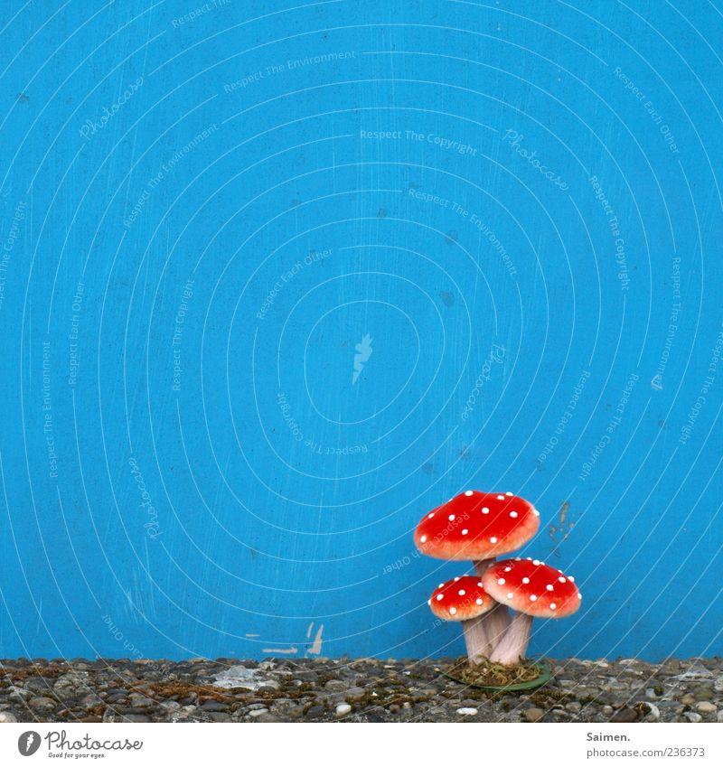 fliegenpilz vor blaugestrichener Hausfassade rot ruhig Wand Mauer Fassade Wachstum außergewöhnlich Kunststoff Pilz skurril bizarr gestellt Textfreiraum