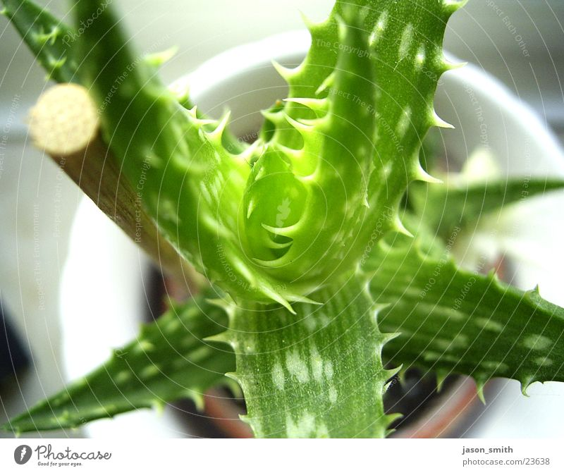 kaktus Kaktus grün Topfpflanze Vogelperspektive Stock Natur Makroaufnahme aufer fensterbank