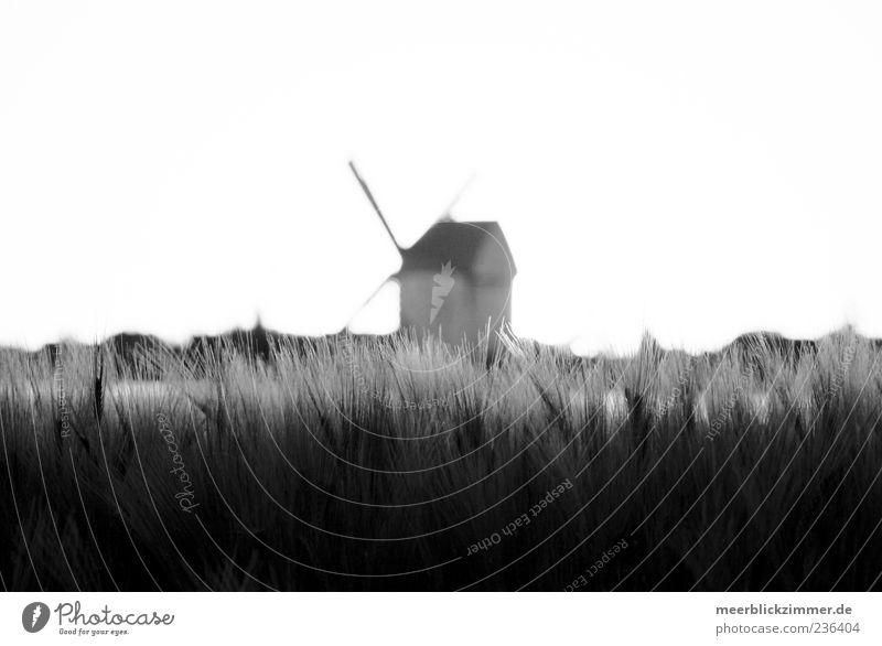 Mittelpunkt Umwelt Natur Pflanze Feld Getreide Getreidefeld Windrad Windmühle Windmühlenflügel Schwarzweißfoto Außenaufnahme Textfreiraum links