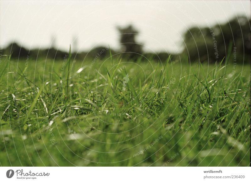 Im Gras 1 Natur grün Sommer Erholung Umwelt Wiese träumen Zufriedenheit Freizeit & Hobby natürlich liegen Ausflug Wachstum Lebensfreude grasgrün