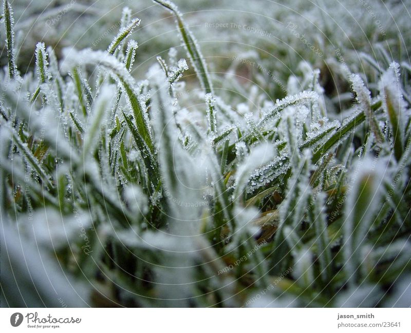 frozen green gefroren Winter kalt nah Rasen Eis Schnee