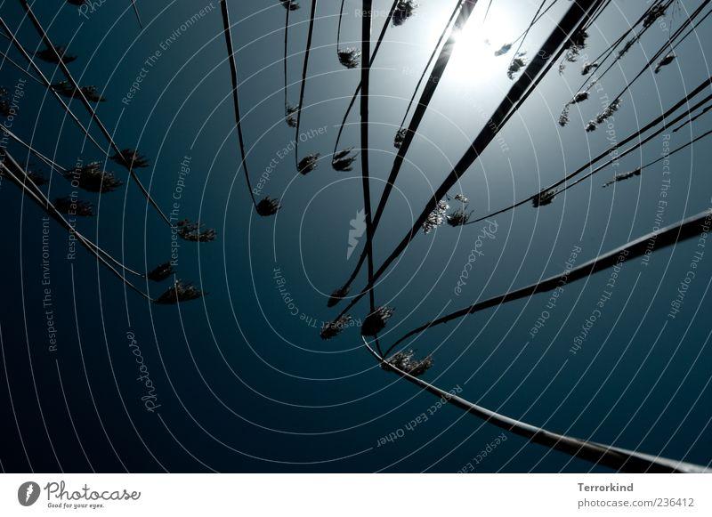 Spiekeroog | gegenwind Halm Gras klein Sonne Gegenlicht grell Himmel Blauer Himmel Schönes Wetter Sonnenlicht Wachstum Menschenleer Froschperspektive bewachsen