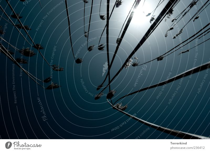Spiekeroog | gegenwind Himmel Sonne Gras klein Wachstum Schönes Wetter Halm Blauer Himmel grell