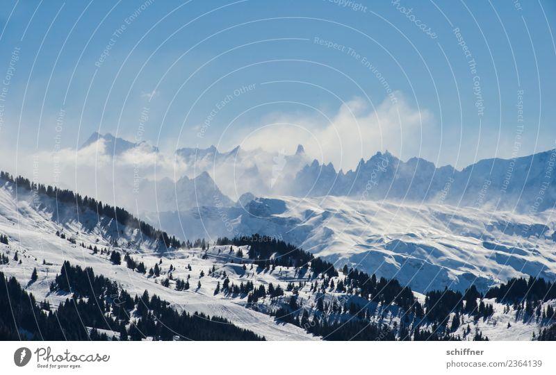 Puderzuckersturm III Umwelt Natur Landschaft Wolkenloser Himmel Sonnenlicht Winter Schönes Wetter Wind Eis Frost Schnee Baum Felsen Alpen Berge u. Gebirge