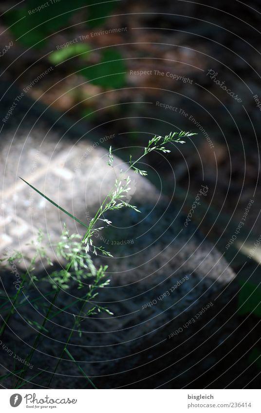Leben & Tod II grün Pflanze Gras grau Vergänglichkeit Friedhof Grabstein