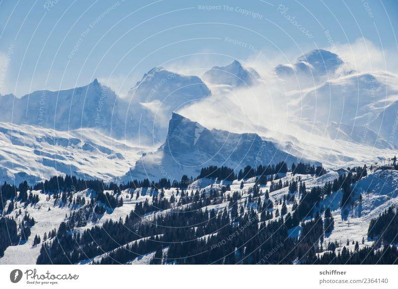Puderzuckersturm II Umwelt Natur Landschaft Wolkenloser Himmel Winter Schönes Wetter Sturm Eis Frost Schnee Baum Felsen Alpen Berge u. Gebirge Gipfel