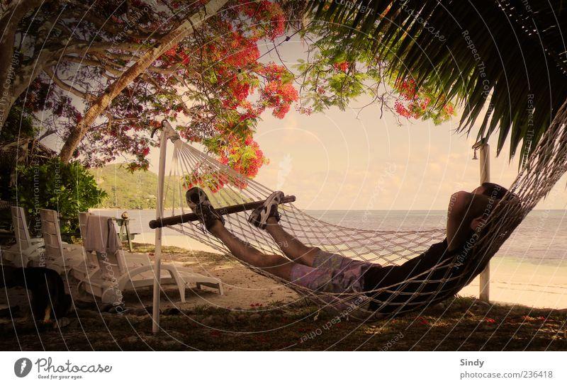 Der Perfekte Ort Mensch Himmel Mann Natur Jugendliche Wasser Baum Pflanze Meer Sommer Strand Freude Erwachsene Ferne Erholung Landschaft