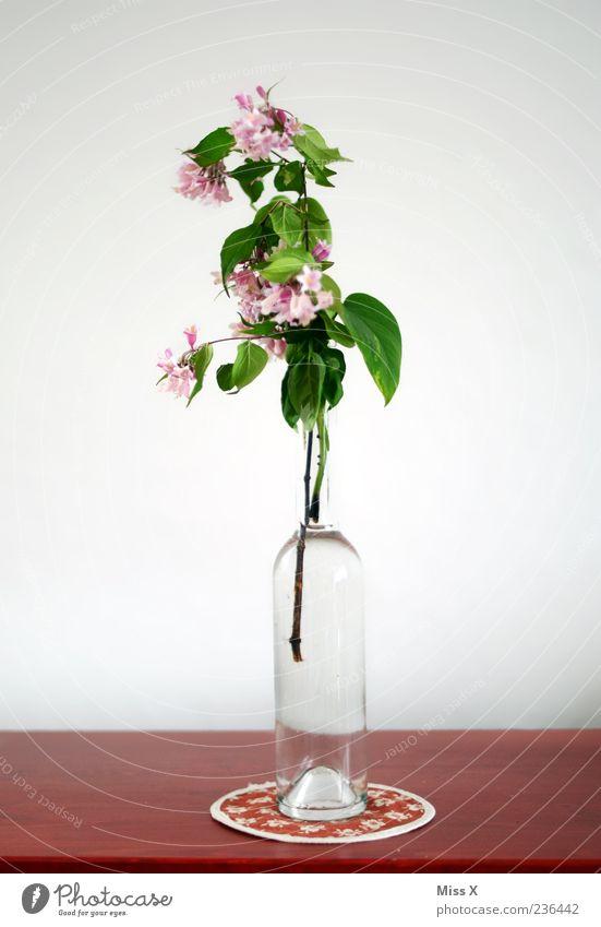 Stillleben Dekoration & Verzierung Tisch Blume Blatt Blüte Blühend Duft verblüht rosa rot Ast Zweig Zweige u. Äste Vase Flasche Glasflasche Blumenvase
