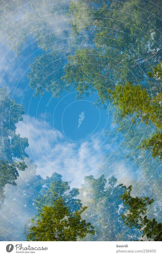 wAldluft Umwelt Natur Landschaft Pflanze Himmel Wolken Frühling Sommer Klima Schönes Wetter Baum Unendlichkeit schön blau grün Stimmung Doppelbelichtung