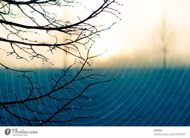 Im Frühtau Natur Baum Sonne Winter gelb Landschaft kalt Herbst Park Regen Nebel Ast Tau Zweige u. Äste Sonnenuntergang Nebelschleier
